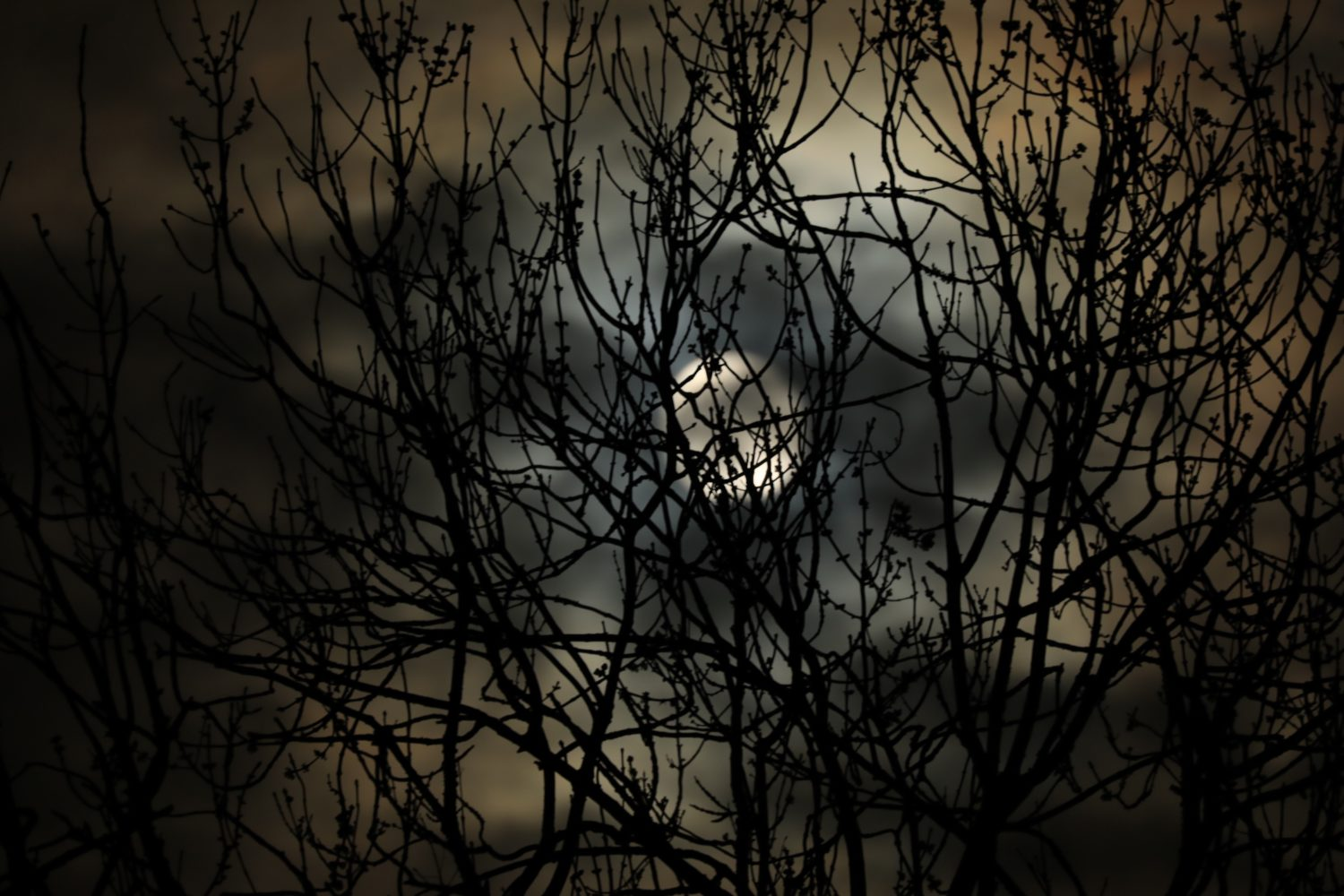 A full moon obscured by the branches of trees.